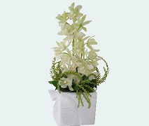 Orchid arrangement in ceramic pot Free Delivery Auckland Wide