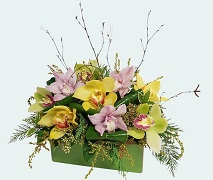 Floral arrangement using popular orchids mixed with seasonal flowers. Free Delivery North Shore Hospital Auckland.