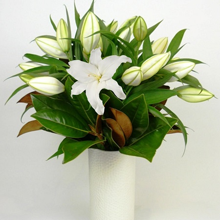 Simplicity Vase of White Lillies