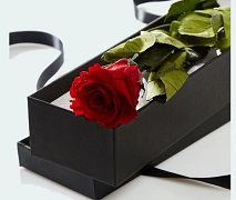 single red rose in gift box. Free Delivery Auckland.